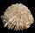 Sandrose 5 Stk. a´ ca. 25 mm